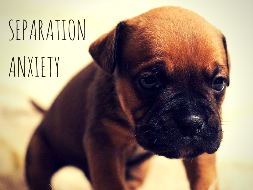 How to treat your dog with separation anxiety