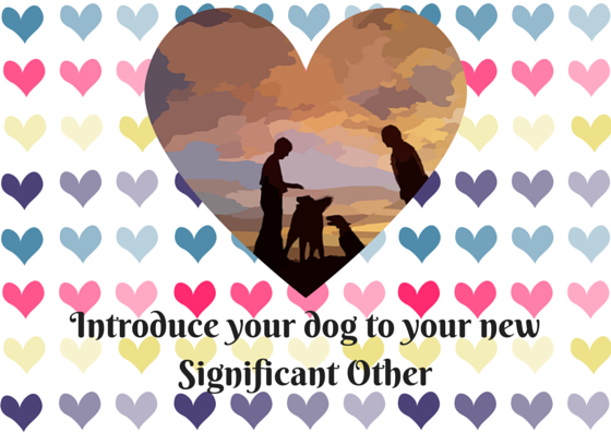 Introduce your dog to your new