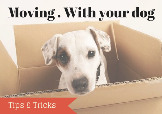 Moving . With your dog