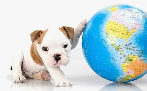 dogs-earth-day